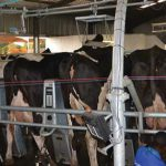 DeLaval delivers more  milk with less stress