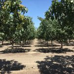 Lesson learned from American nut farmers