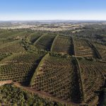 Bold EC macadamia nut project unlocks opportunity in the rural space
