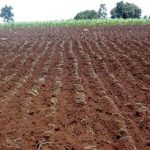 SOIL: The farmer's most important asset – PART 15: Organic material in soil (ii)