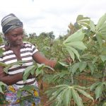 Smallholder farmers benefit from Musika's consolidation strategy