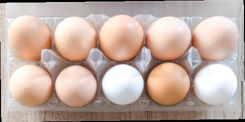 Novatek reveals the hidden reason for white eggs on layer