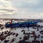 AfriKelp mines health from the sea
