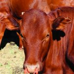 Take the stress out of weaning