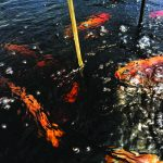 Aerators in fish farming; a new trend in aquaculture systems