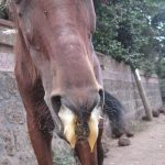 African horse sickness outbreak in the northern parts of South Africa