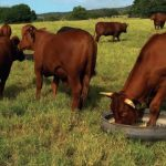 Make profit by mixing your own livestock feed
