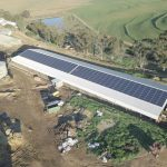 A 340-cow dairy farm gets electric freedom with Max Yield Energy