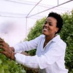 Call to enter for SAB kickstart urban agri programme