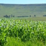 Land, trust and restitution: Zimbabwe's three hurdles to becoming the breadbasket of Africa