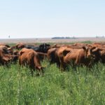 Invest in winning pastures and raise farming profits