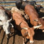 The farmer's guide to guard against stock theft – Part 1