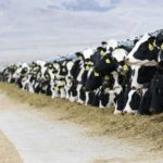 Create the perfect environment for your dairy cattle – Part 8: Milking parlours and related structures
