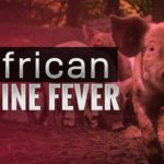 Biosecurity is the only defence against African Swine Fever