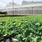 Allow nature to help fight pests in net-covered hothouses