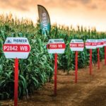 Corteva advice for the new maize planting season
