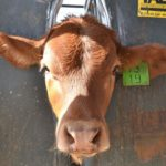 Let Tal-Tec and eWeigh be your solution for traceability