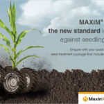 MAXIM® Quattro – the new standard in traction against seedling diseases