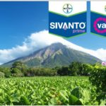 Bayer partners with farmers to shape future of tobacco farming