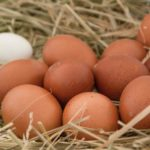 Making profit from poultry – Part 3: Commercial egg production