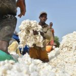 Good news for cotton farmers in Zimbabwe! Bayer breaks barriers to growth with Tihan OD 175