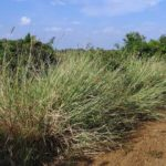 Saving Namibia's livestock industry – Part 6: Different rangeland approaches or case studies/best practices