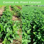 PlantCatalyst: Deal with fertiliser shortage and increased costs: Part 1