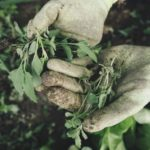 Managing weeds in your fields: What is the best approach?