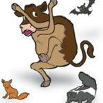 The risks associated with Rabies