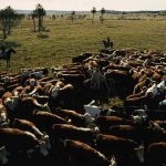Stretch your grazing with good management