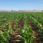 Qualibasic Seeds: Improved seed quality leads to increased productivity
