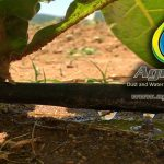 Grow more with less water with Agri600