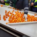 Twelve years in the making: Citrus industry sends off the first shipment of South African citrus to the Philippines