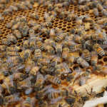 Turn your crops into condiments and seasonings Part 8: Honey's sweet rewards
