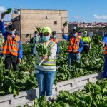 SAB turns brewery waste into spinach for the sake of local communities