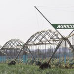 LEPA irrigation with Agrico: Onion farmer finds multiple benefits